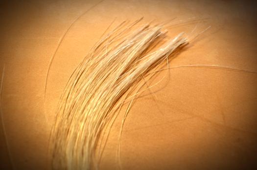 弓1本分の弓毛